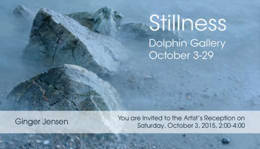 Stillness Dolphin Gallery Postcard